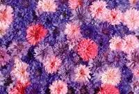 Цветы живые - фото 0060