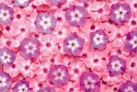 Цветы живые - фото 0061