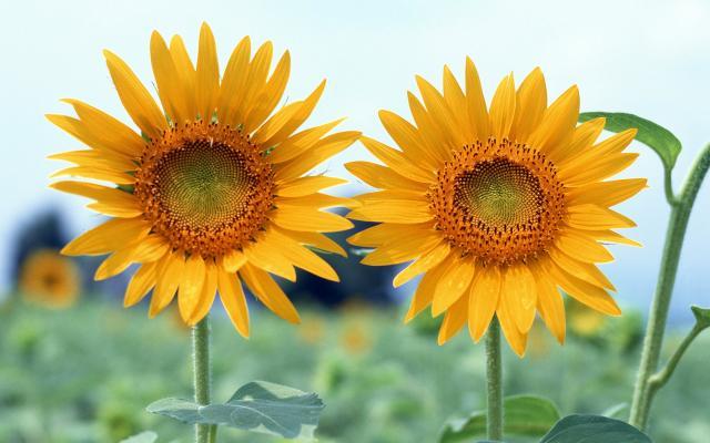 Цветы живые - фото 0062