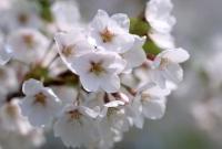 Цветы живые - фото 0063