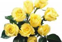 Цветы живые - фото 0064