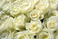 Цветы живые - фото 0065