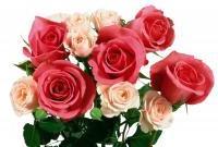 Цветы живые - фото 0066