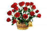 Цветы живые - фото 0071