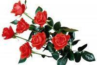 Цветы живые - фото 0072