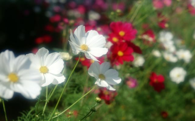 Цветы живые - фото 0076