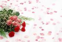 Цветы живые - фото 0078