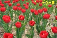 Цветы живые - фото 0079