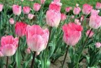 Цветы живые - фото 0080