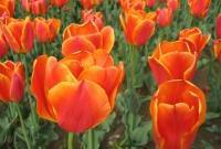 Цветы живые - фото 0083
