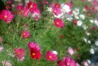 Цветы живые - фото 0084