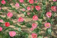 Цветы живые - фото 0086