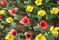Цветы живые - фото 0087