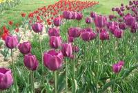 Цветы живые - фото 0088