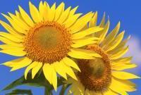 Цветы живые - фото 0089