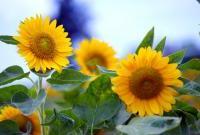 Цветы живые - фото 0091