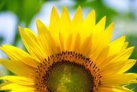 Цветы живые - фото 0092