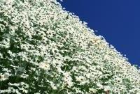 Цветы живые - фото 0094