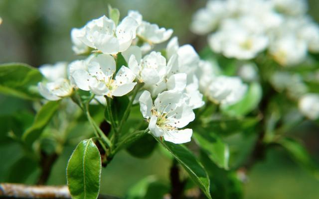 Цветы живые - фото 0097