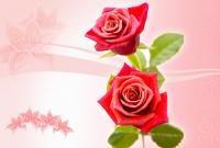 Цветы - фото 0112