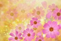 Цветы - фото 0117
