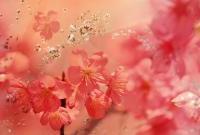 Цветы - фото 0121