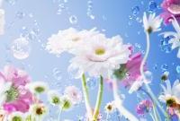 Цветы - фото 0124