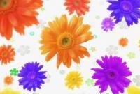Цветы - фото 0128