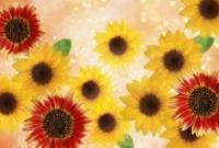 Цветы - фото 0132
