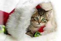Новый год и Рождество - фото 0204