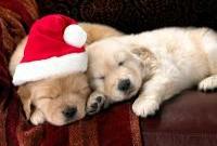 Новый год и Рождество - фото 0218