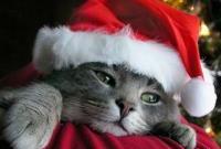 Новый год и Рождество - фото 0244