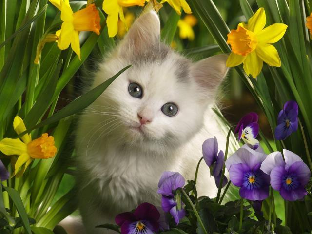 Кошки и котята - фото 0246