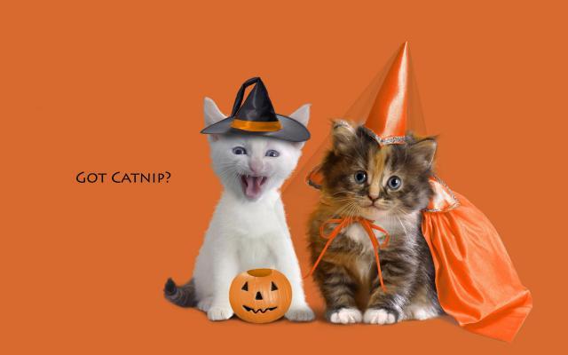 Кошки и котята - фото 0247