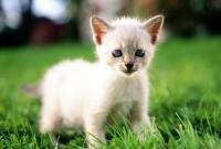 Кошки и котята - фото 0248