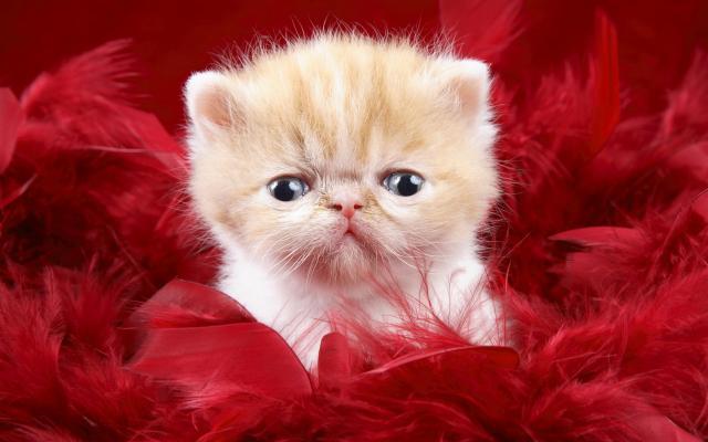 Кошки и котята - фото 0252