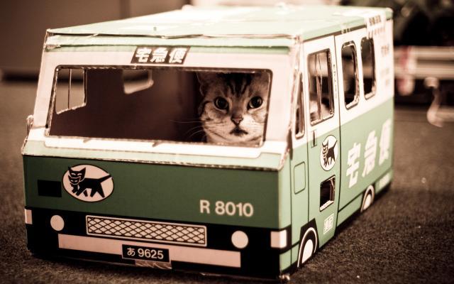 Кошки и котята - фото 0255