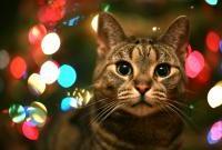 Кошки и котята - фото 0265