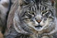 Кошки и котята - фото 0270