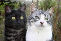 Кошки и котята - фото 0271