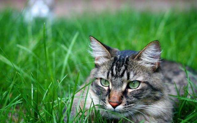 Кошки и котята - фото 0272
