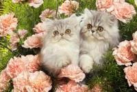Кошки и котята - фото 0277