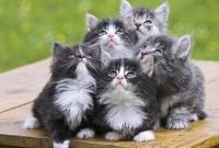 Кошки и котята - фото 0280