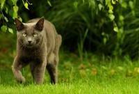 Кошки и котята - фото 0282