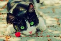 Кошки и котята - фото 0283