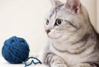 Кошки и котята - фото 0294