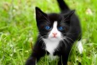 Кошки и котята - фото 0295
