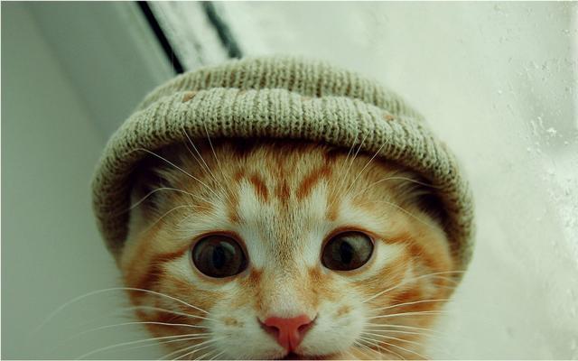 Кошки и котята - фото 0296