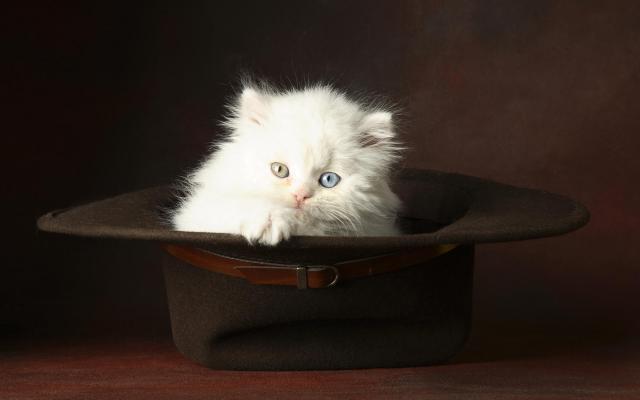 Кошки и котята - фото 0298