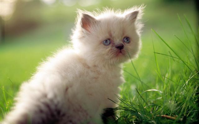 Кошки и котята - фото 0300